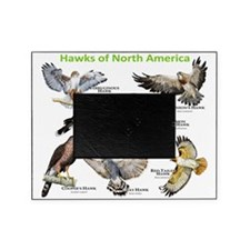 Hawks of North America Picture Frame