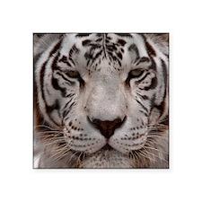 """(14) White Tiger 4 Square Sticker 3"""" x 3"""""""