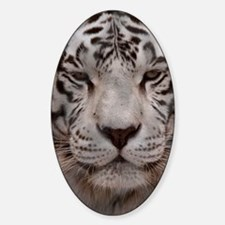 (11p) White Tiger 4 Decal