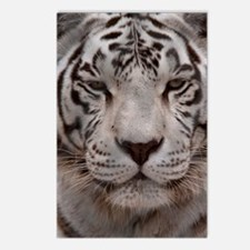 (11p) White Tiger 4 Postcards (Package of 8)