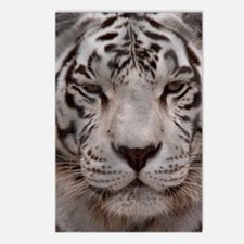 (12p) White Tiger 4 Postcards (Package of 8)