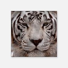 """(15s) White Tiger 4 Square Sticker 3"""" x 3"""""""