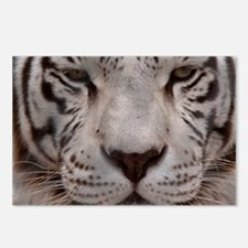 (12) White Tiger 4 Postcards (Package of 8)