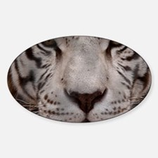 (12) White Tiger 4 Decal