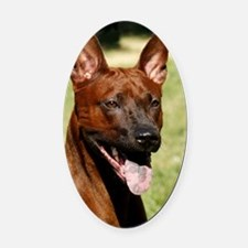 Thai Ridgeback 9Y815D-019 Oval Car Magnet