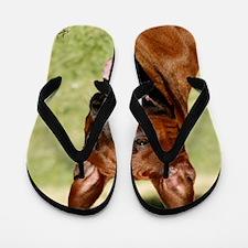 Thai Ridgeback 9Y815D-019 Flip Flops