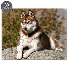 Siberian Husky 9Y773D-064 Puzzle