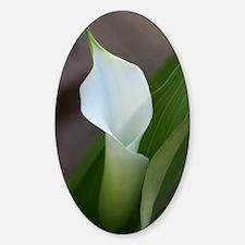 Cala Lily (2) Sticker (Oval)