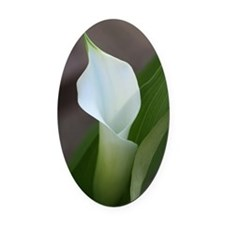 Cala Lily (2) Oval Car Magnet