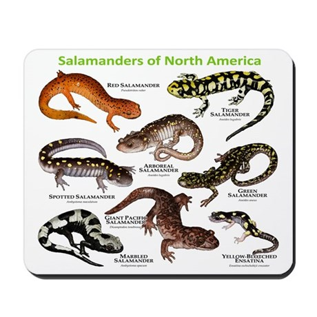 Finding Salamanders for Fun and Study: Where to Look and How To ...