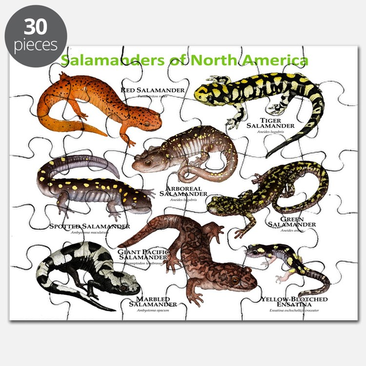 Salamanders of North America Puzzle