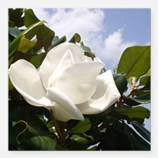 "Magnolia In Heaven Square Car Magnet 3"" x 3"""