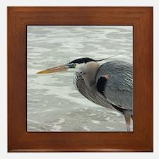 birds 071 Framed Tile