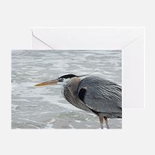 birds 071 Greeting Card