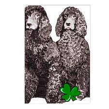irish water spaniels brow Postcards (Package of 8)