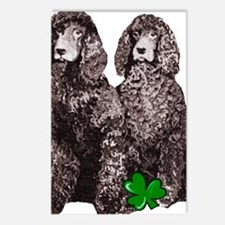 irish water spaniels brow Postcards (Package of 8)