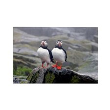 puffin twins Rectangle Magnet