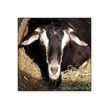 "smiling-goat Square Sticker 3"" x 3"""