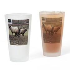 3 Sheep at odds Drinking Glass