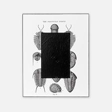 TRILOBITES Picture Frame