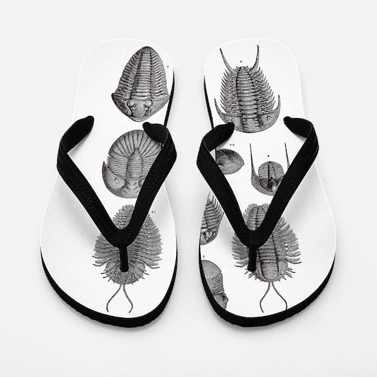 TRILOBITES Flip Flops