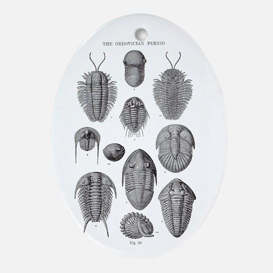 TRILOBITES Oval Ornament