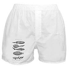 FISH FOSSILS Boxer Shorts