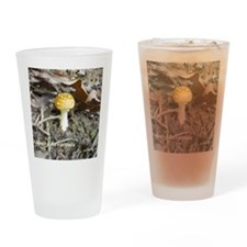 Amanita-flavoconia Drinking Glass