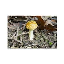 Amanita-flavoconia Rectangle Magnet