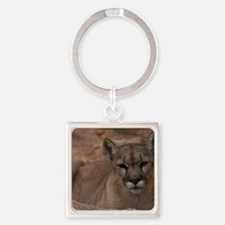 (2) Mountain Lion 1 Square Keychain