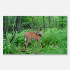 Young Bucks Rectangle Decal