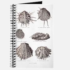 Fossil Shells Journal