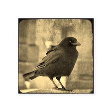 "Antique Crow Square Sticker 3"" x 3"""