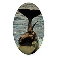 WHALE OUT OF WATER Decal