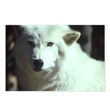 Watching Wolf Postcards (Package of 8)