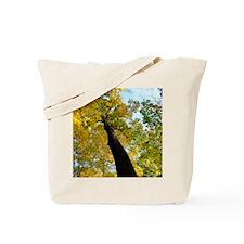 fall tree square Tote Bag