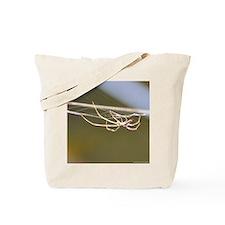 spider square Tote Bag