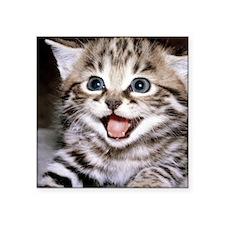 "funny-cats-wallpaper-galler Square Sticker 3"" x 3"""