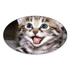 funny-cats-wallpaper-gallery-12 Decal