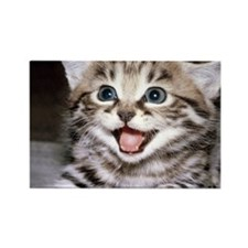 funny-cats-wallpaper-gallery-12 Rectangle Magnet