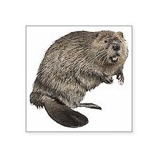 "Beaver Square Sticker 3"" x 3"""