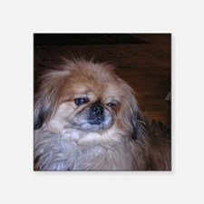 "Pekinese Square Sticker 3"" x 3"""