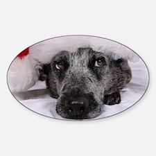 Christmas Blue Heeler Sticker (Oval)