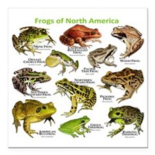 """Frogs of North America Square Car Magnet 3"""" x 3"""""""