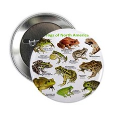 """Frogs of North America 2.25"""" Button"""