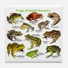 Frogs of North America Tile Coaster