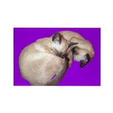 Siamese Cat sleeping kittens Rectangle Magnet