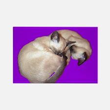 Siamese Cat sleeping kittens Rectangle Magnet