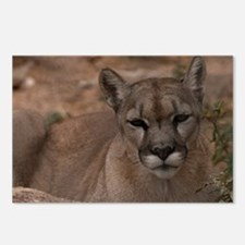 (4) Mountain Lion 1 Postcards (Package of 8)