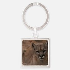 (4) Mountain Lion 1 Square Keychain